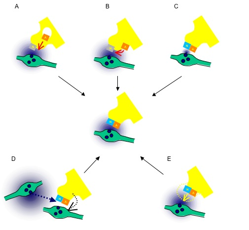Alternative models for silent synapses